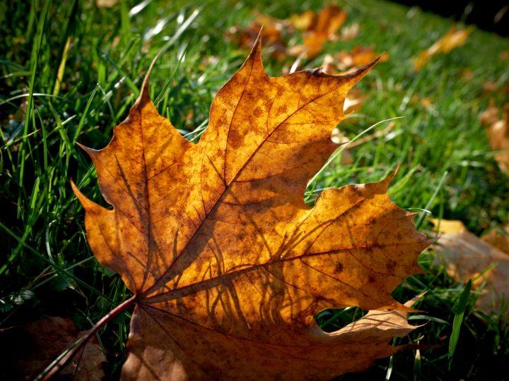 Jesenné prázdniny na severnom Spiši. Strašidlá, čokoláda aj zdravie